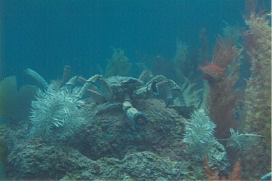 20,000 Leagues Under the Sea crab