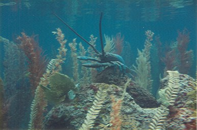 20,000 Leagues Under the Sea lobster