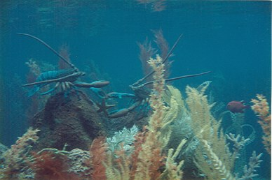 20,000 Leagues Under the Sea fighting lobsters